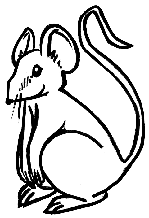 sketch of norway rat sitting on its haunches