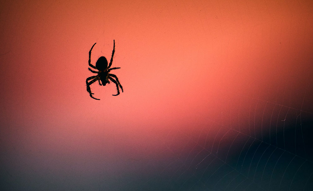 Spider on web on a eerie red background